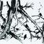 http://www.birenboimdan.com/Assets/Images/32/48/Small/a24_birds.jpg